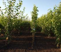 Nursery seedlings of Ukraine. Buy seedlings in the nursery